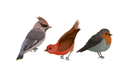 Feathered Birds or Aves as Warm-blooded Flying Creatures Vector Set