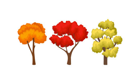 Autumn Trees with Trunk and Bright Foliage Vector Set