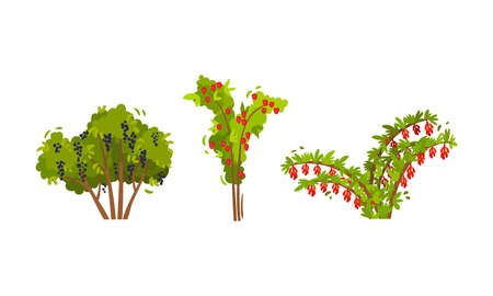 Branched Berry Bush and Shrub with Ripe Fruit Vector Set Vektorgrafik
