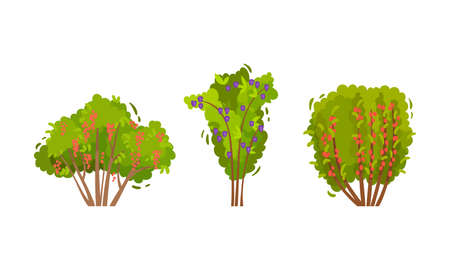 Branched Berry Bush and Shrub with Ripe Fruit Vector Set Иллюстрация