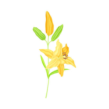 Lily on Stalk as Herbaceous Flowering Plant with Large Prominent Flower with Stamens Vector Illustration