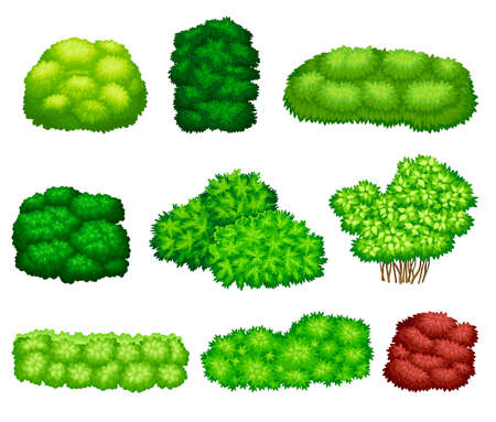 Different Bushes as Perennial Woody Plant with Dense Foliage Cover Vector Set