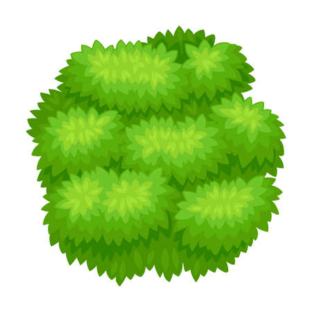 Lush Underwood or Bush as Perennial Woody Plant with Dense Foliage Cover Vector Illustration