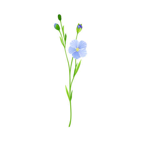 Blue Flax or Linseed Flowers with Five Petals as Cultivated Flowering Plant Specie Vector Illustration
