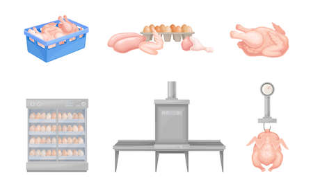 Hen Eggs Incubator and Dressed Chicken Vector Set