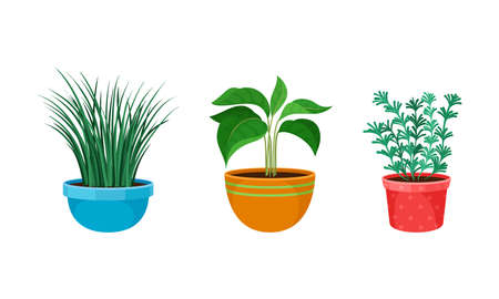 Tropical or Semi-tropical Houseplant Growing in Potting Soil in Ceramic Flowerpot Vector Set