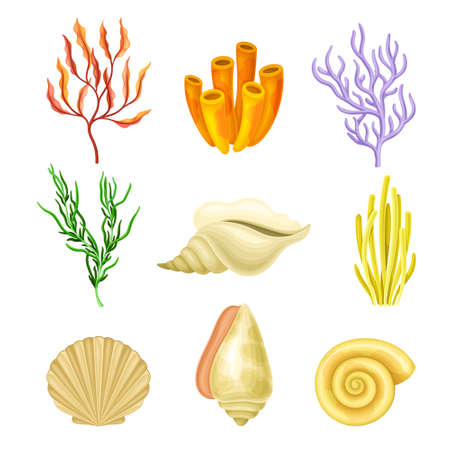 Coral Polyps and Seashell as Marine Fauna Vector Set