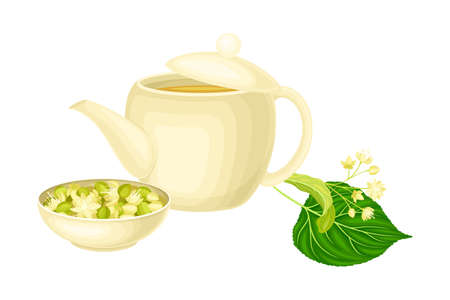 Small-leaved Linden or Tilia Cordata Blossom with Lime Tea in Teapot Vector Illustration