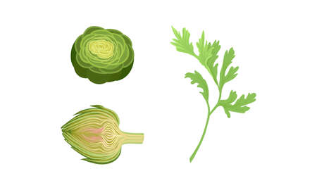 Celery and Globe Artichoke as Cultivated Vegetable for Vegetarian Nutrition Vector Set