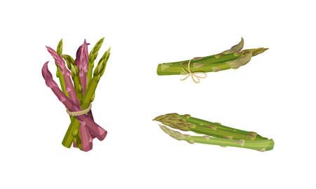Garden Asparagus or Sparrow Grass as Spring Vegetable Tied in Bunch