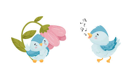 Cute Blue Bird Singing Song and Sitting Near Flower