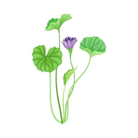 Tall Stem or Stalk with Violet Floret and Green Broad Leaves  イラスト・ベクター素材