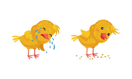 Cute Chicken Crying and Picking Grains Vector Set
