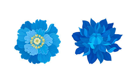 Blue Flowers with Lush Petals and Stem Vector Set 向量圖像