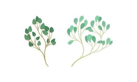 Sprigs and Twiglets with Green Leaves as Botanical Foliage Vector Set 向量圖像