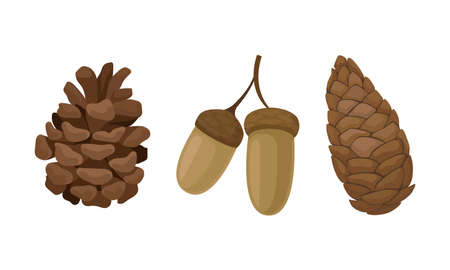 Fir or Pine Cones and Acorns as Seed Containing Plant Part Vector Set 向量圖像