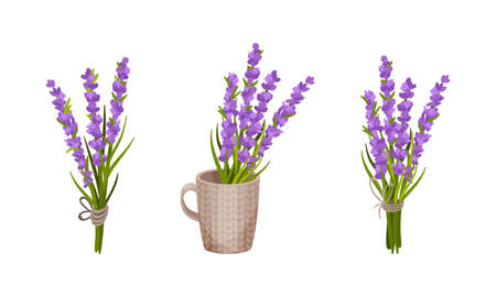 Bunch of Violet Lavender Twigs Tied Together and Rested in Mug Vector Set