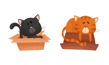 Adorable cats in boxes set. Funny black and red cat sitting and sleeping with cardboard box cartoon vector illustration