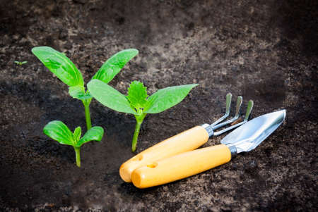 Green plants grow from the ground and garden tools