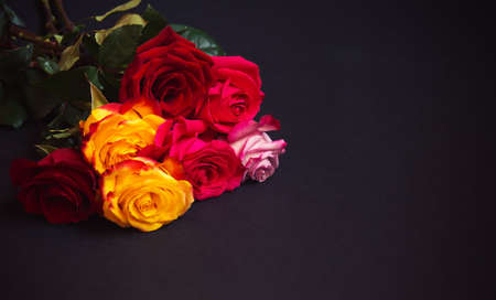 Bunch of colorful roses  on dark background.  Selective focus. View with copy space. Standard-Bild