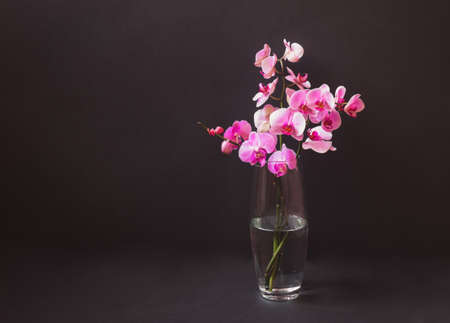 Purple orchid in glass vase on dark background. View with copy space. Standard-Bild