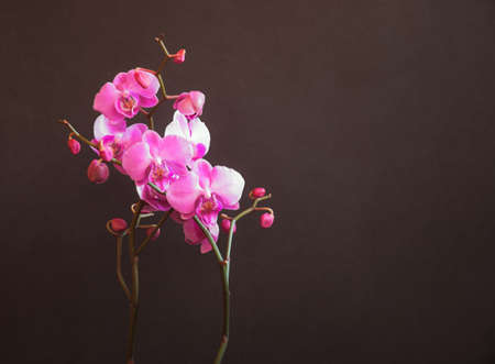 Purple orchid on dark background. View with copy space.