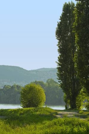 trees in the bank of river Danube
