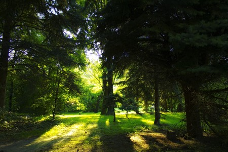 backlighted trees in the park