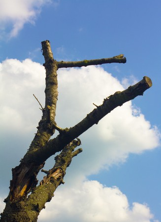 Dead tree branch, under the blue, cloudy sky