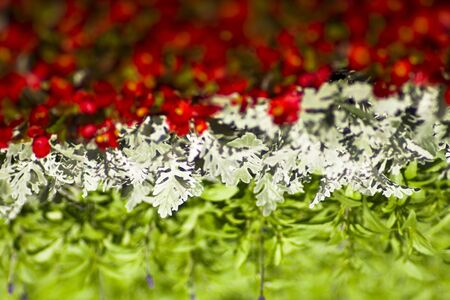 flowers forming Hungarian flag