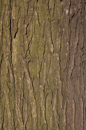 Tree cortex texture for background use
