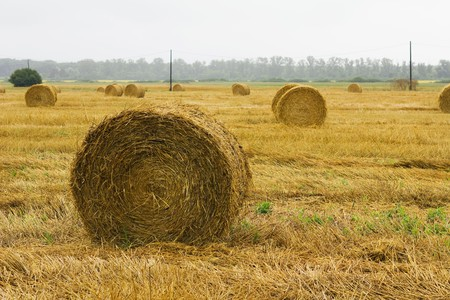 closeup of a circular straw bale for background usage Stock Photo - 7467080