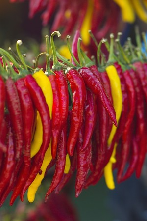Hot pepper, paprika, chilli or cayenne in a row
