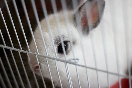 rabbit cage: rabbit in cage