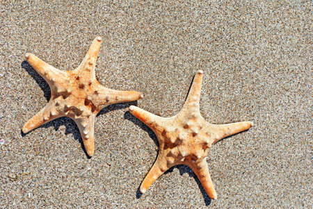 two sea-stars lying on sand beach background Stock Photo - 18260572