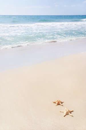 two sea-stars lying on sand beach against waves Stock Photo - 18259694