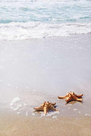 starfish beach: two sea-stars lying on sand beach against waves
