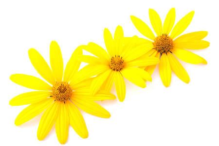 노란색 꽃은 흰색 배경에 고립 된 엽서 장식