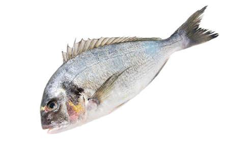 one Fresh Dorado Fish isolated on white background Stock Photo - 18259389