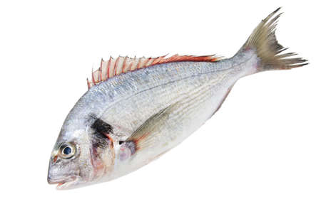 raw gold: one Fresh Dorado Fish isolated on white background Stock Photo