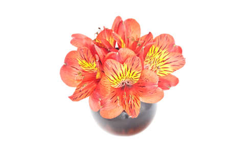 Yellow Red Alstroemeria Lily bouquet isolated on white photo