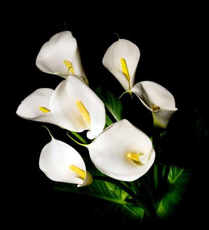 fleur arum: bouquet de sept lys blanc Calla isol� sur fond noir Banque d'images