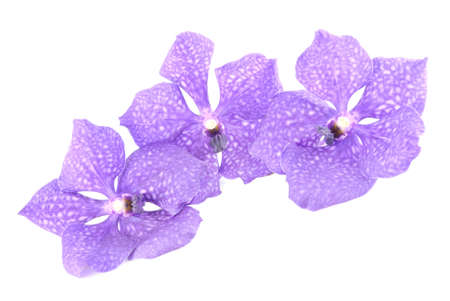 violaceous: three blue orchids branch isolated on white background Stock Photo
