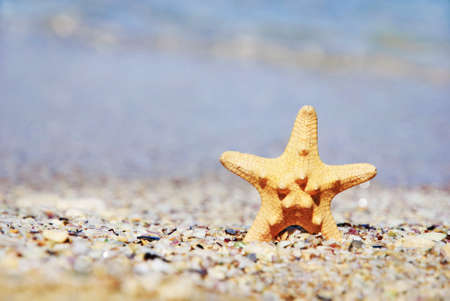 two sea-stars lying on sand beach with waves background Stock Photo - 18260238