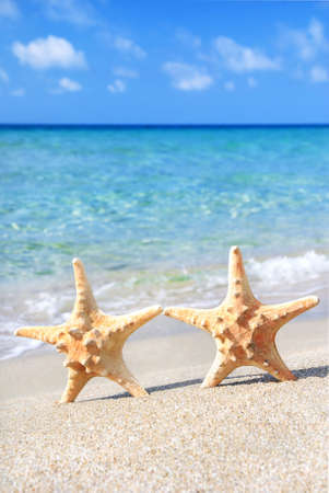 wedding beach: holiday concept - two sea-stars walking on sand beach against waves background