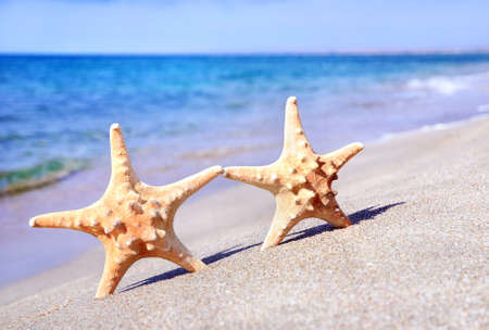 holiday concept - two sea-stars walking on sand beach against waves background Stock Photo - 18260184