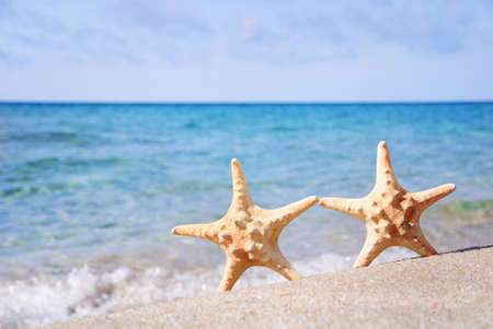 boda en la playa: concepto de vacaciones - dos mar-estrellas a pie de playa en la arena contra el fondo ondas