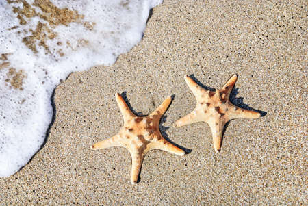 two sea-stars lying on sand beach with waves background photo