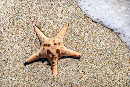 two sea-stars lying on sand beach with waves background Stock Photo - 18260553