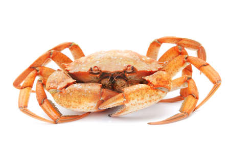 big red boiled crab isolated on white background Stock Photo - 18259565